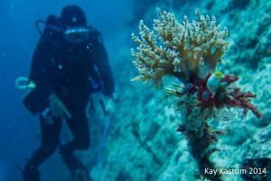 Scuba Diver in Mabul Island of Sabah