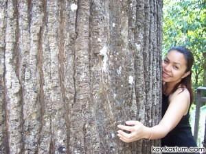 Pokoknya Besar