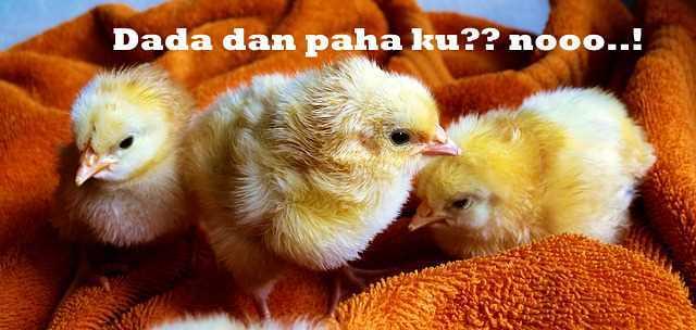 Ayam Bakal Makanan
