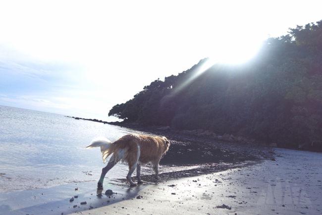 kelambu_beach_kudat_coral_beach